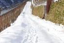 verschneiter Weinbergsweg